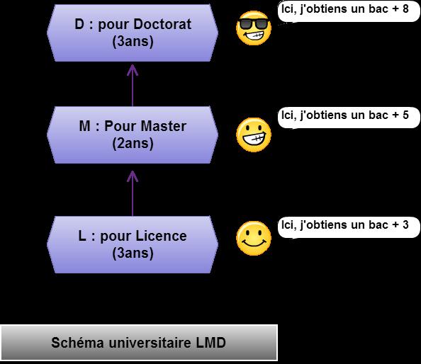 Schema universitaire