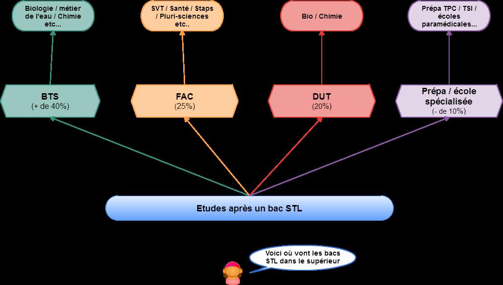 le schéma des études après un bac STL